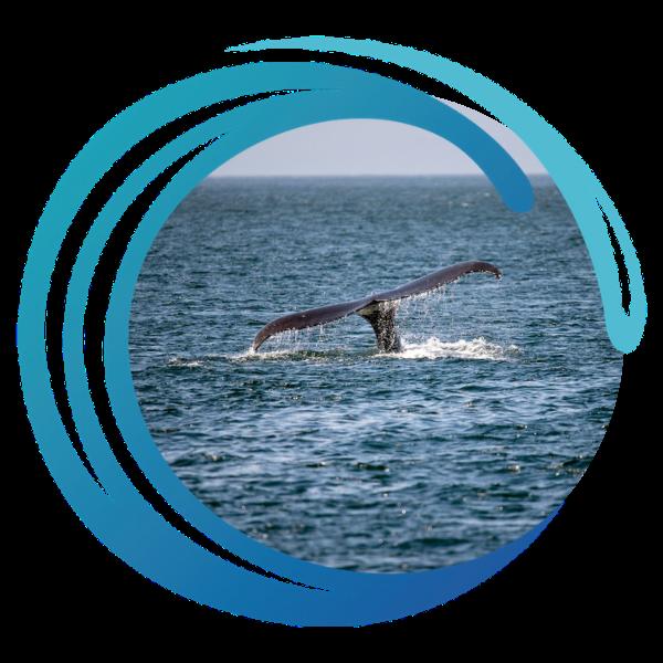ocean-office-walvisstaartje-600